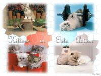 Cute Animal Vol. 7