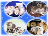 Cute Animal Vol. 8