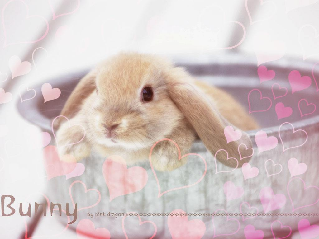 Pink Bunny with Hearts