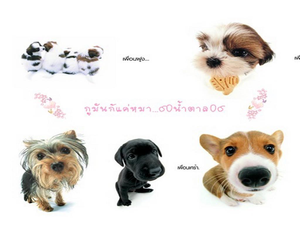 หมาน่ารักๆ wallpaper