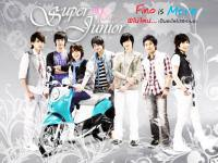 .:Super Junior-Fino:.