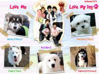 TVXQ Love Me Love My Dogs