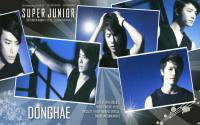 Super Junior SS3 :: Donghae