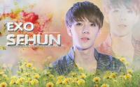 SEHUN EXO (Flower Boy)