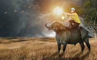 Farmer & Buffalo Manipulation